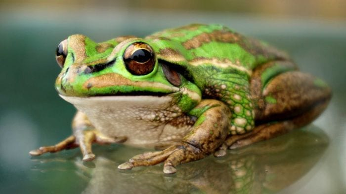 Description: Image result for Facts About Frogs and Salt