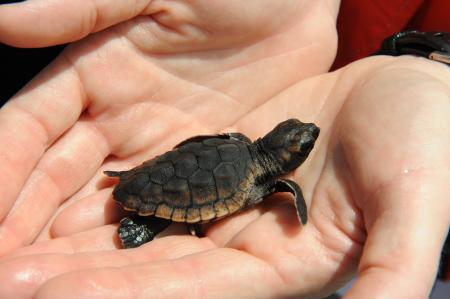 Description: Image result for How to Pet & Handle A Scared Turtle