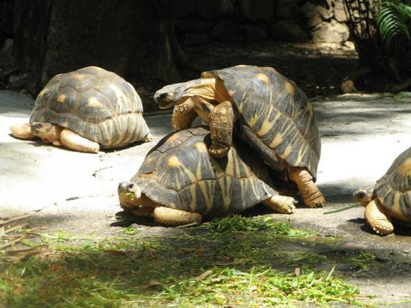 Description: Image result for Turtle Reproduction: Age and Sexual Maturity